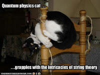 cats meme