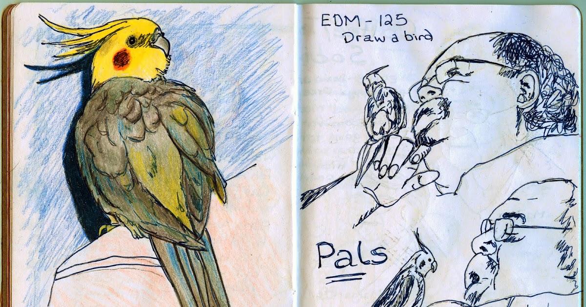 Ana's Ramblings & Art Corner: EDM 125 - Draw a Bird