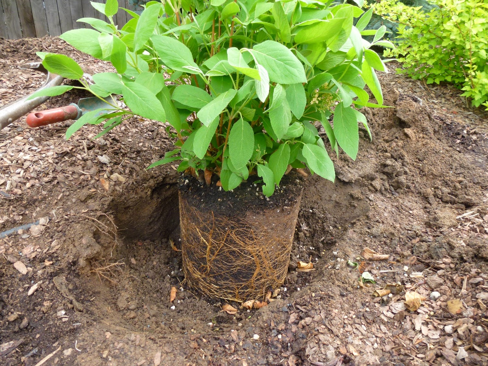 Colorado Garden Punch List Plant Root