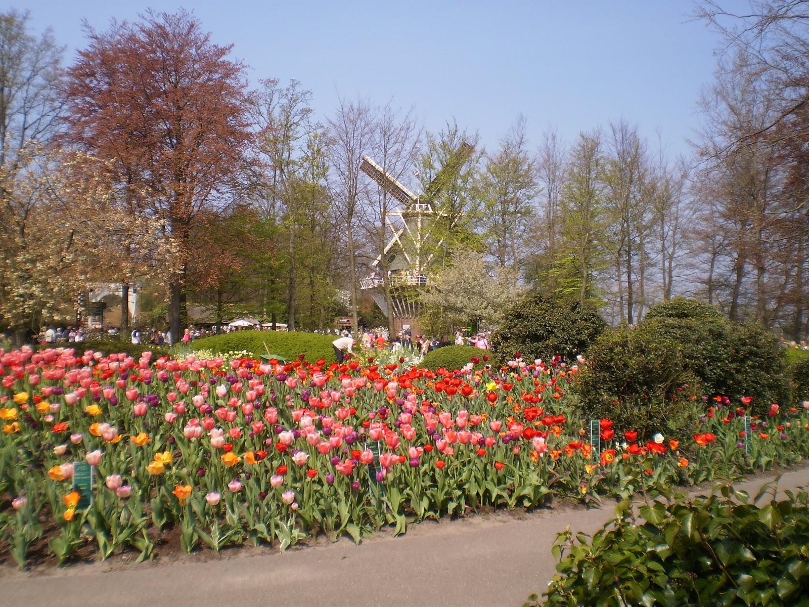 Gardening Airy Fairies: Trip to Keukenhof and Amsterdam, 2 May - 5 ...