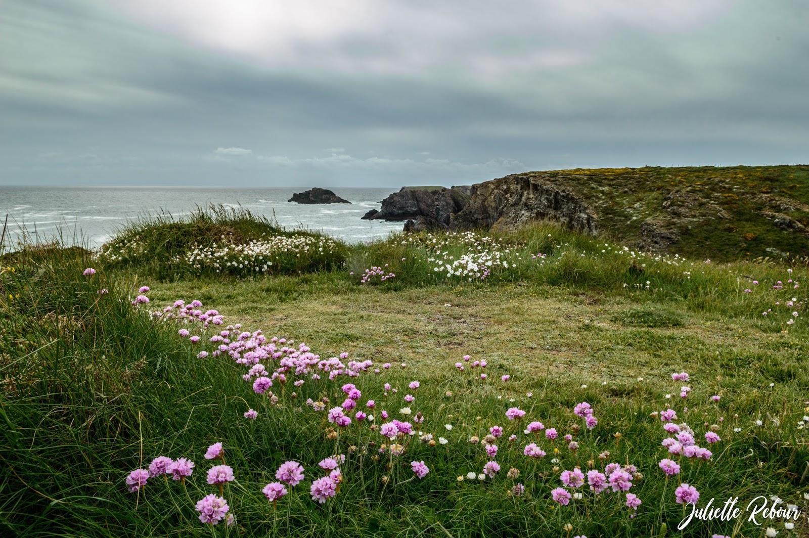Belle Ile en mer au printemps