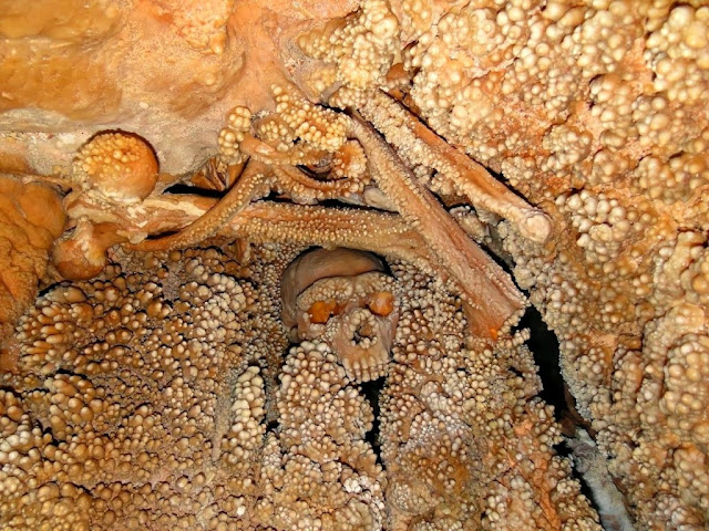 Oldest Neanderthal DNA Found in Italian Skeleton