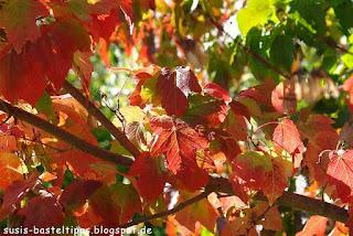 Herbstlaub im Gegenlicht, Foto von Susanne McDonald, unabhängige Stampin' Up! Demonstratorin