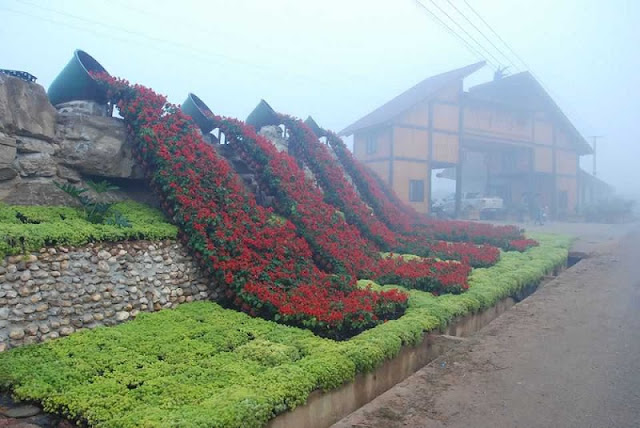 Enjoy the beauty of flowers blossoming in Bac Ha Flower Valley