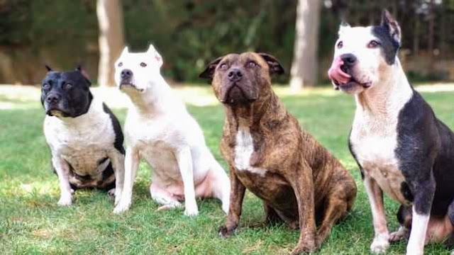 Los perros mas peligrosos del mundo