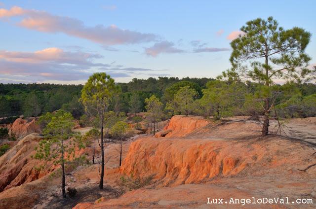 http://angelo-deval.pixels.com/featured/ludo-pine-trees-at-twilight-in-algarve-angelo-deval.html