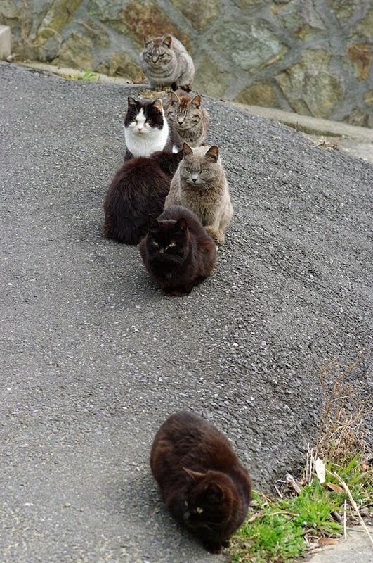 kucing di pulau Tashirojima