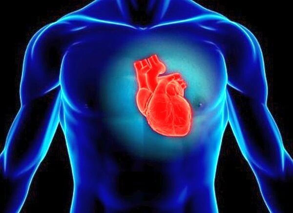 Cours PDF   Insuffisance Cardiaque chez l'adulte, prévention et traitements