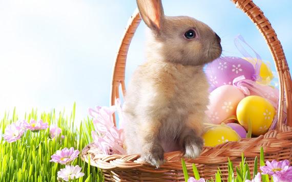 Happy Easter download besplatne pozadine za desktop 1680x1050 widescreen slike ecards čestitke Sretan Uskrs