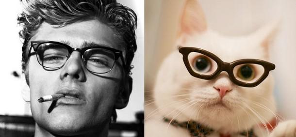 men and kittens