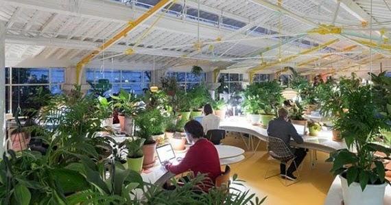Protecci n ante la contaminaci n con plantas de interior for Plantas de interior madrid