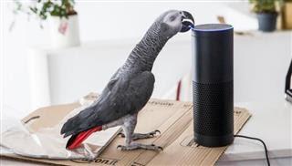 Ένας παπαγάλος έκανε παραγγελία στο Amazon!