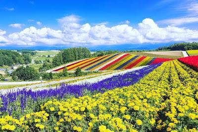Taman bunga di bukit biei, Jepang