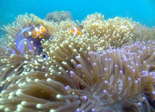 Tanjung Putus