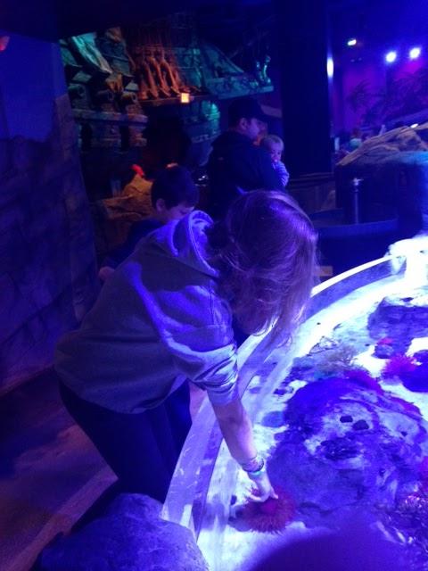 Running Diva Mom Sea Life Minnesota Aquarium At Mall Of