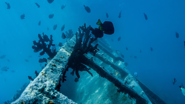 Among the shipwreck in Pangaimotu