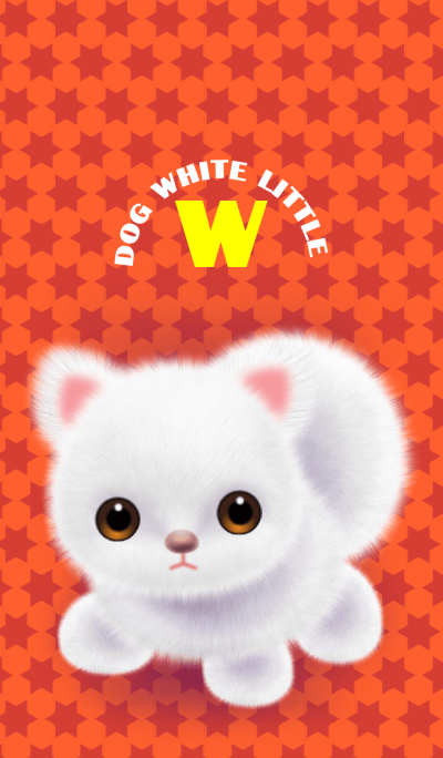 Dog white little