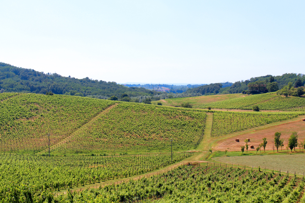 Vineyards at Villa Sparina in Piemonte, Italy - travel & style blog