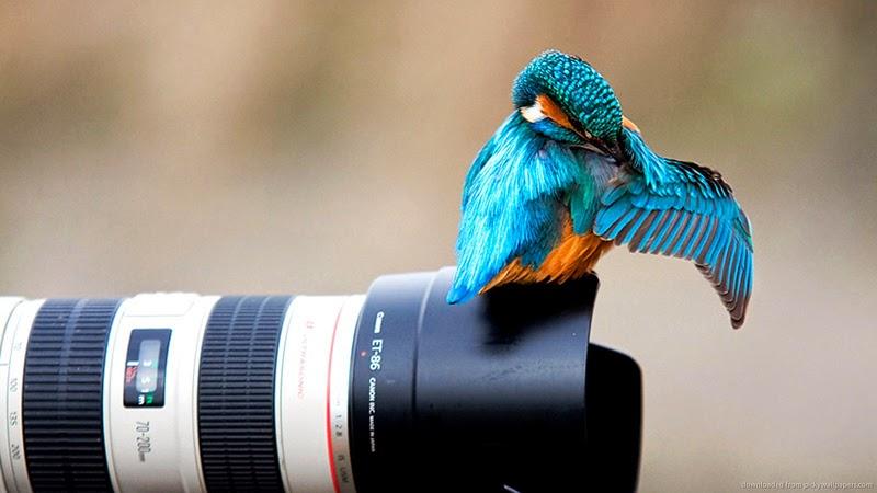 العدسة المناسبة لتصوير الحياة البرية