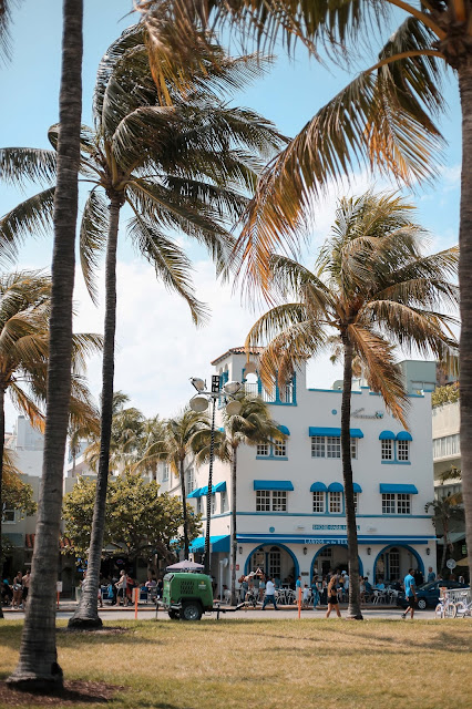 Miami Beach Palm Trees
