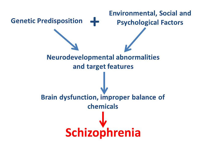 Schizophrenia review flowchart