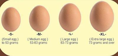7 Tips Memilih Telur yang Segar dan Berkualitas