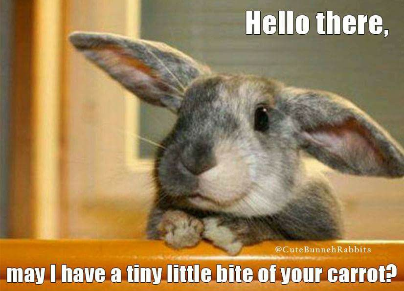 Rabbit Ramblings Funny Bunny Monday Memeday