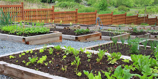 Important Requisites Of The Home Vegetable Garden