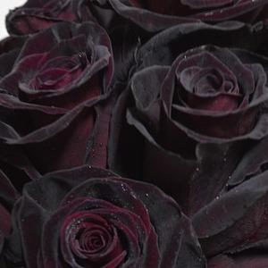 Mawar hitam berarti kematian