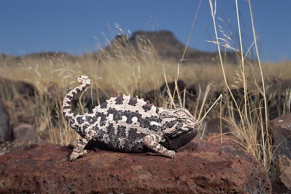 Một loạt tuyệt chiêu chống nóng bá đạo chỉ động vật mới nghĩ ra