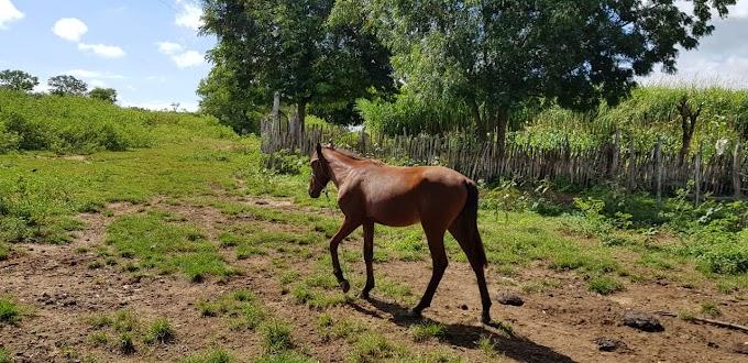 Menores são apreendidos por furtar animais da fazenda do Detran em Santa Quitéria