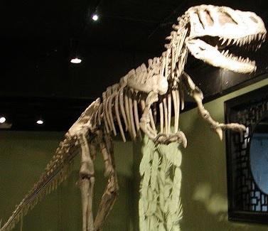 Foto del Sinraptor formado por huesos encontrados