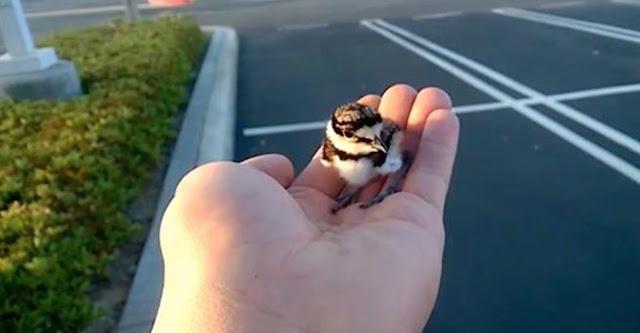 Σώζει το μικρό αυτό πουλί