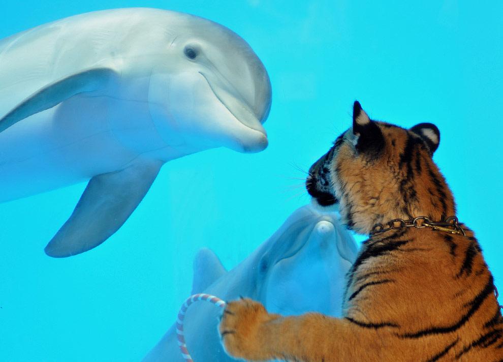 Открытки животных, дельфины фото красивые и смешные