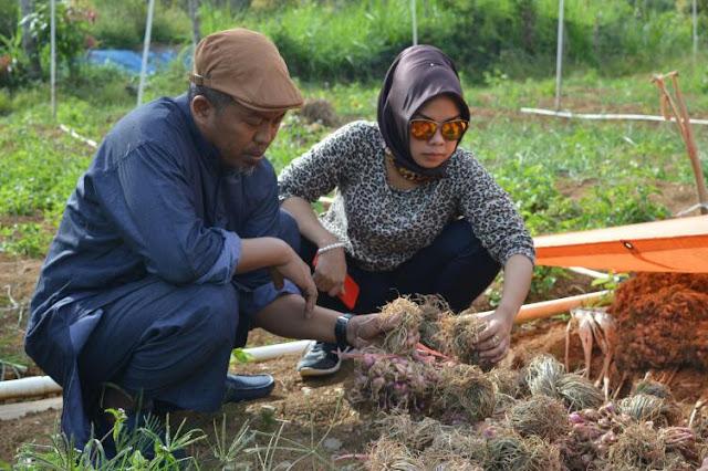 Belajar Bawang Merah di Enrekang, Sul Arrahman Sebut Luwu Juga Cocok