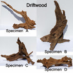 Authentic drift wood for freshwater aquariums, ideal for discus, bettas