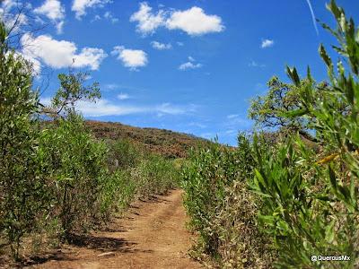 Camino a la Cruz entre madroños y con vista al bosque de encino - Cerro Viejo