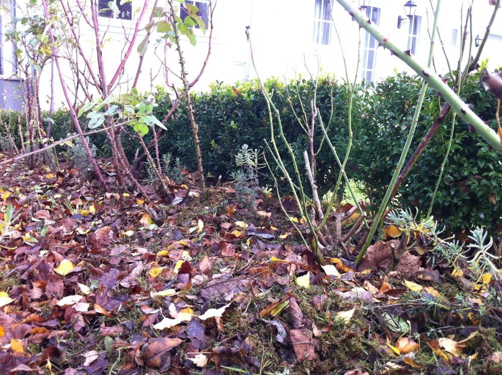 Tolle Gartentipps Rosenfreunde Fragen Soll Ich Meine Rosen Im
