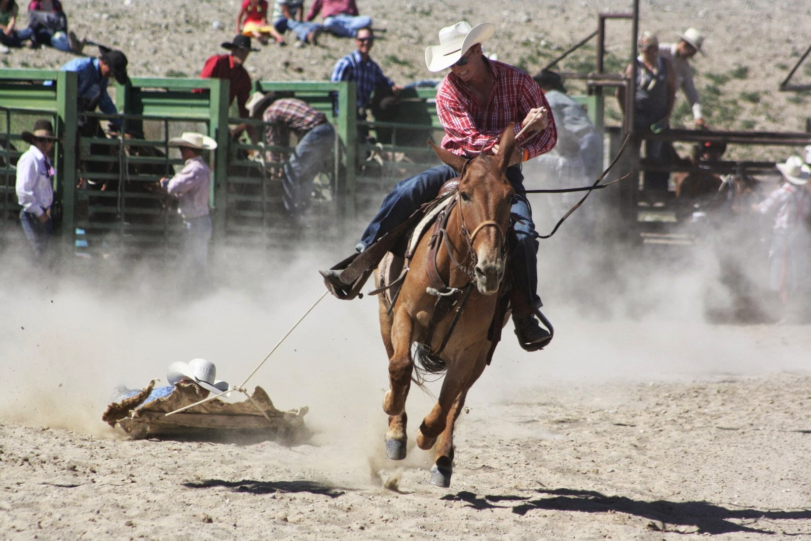 Pairadice Mules Rodeo Pictures