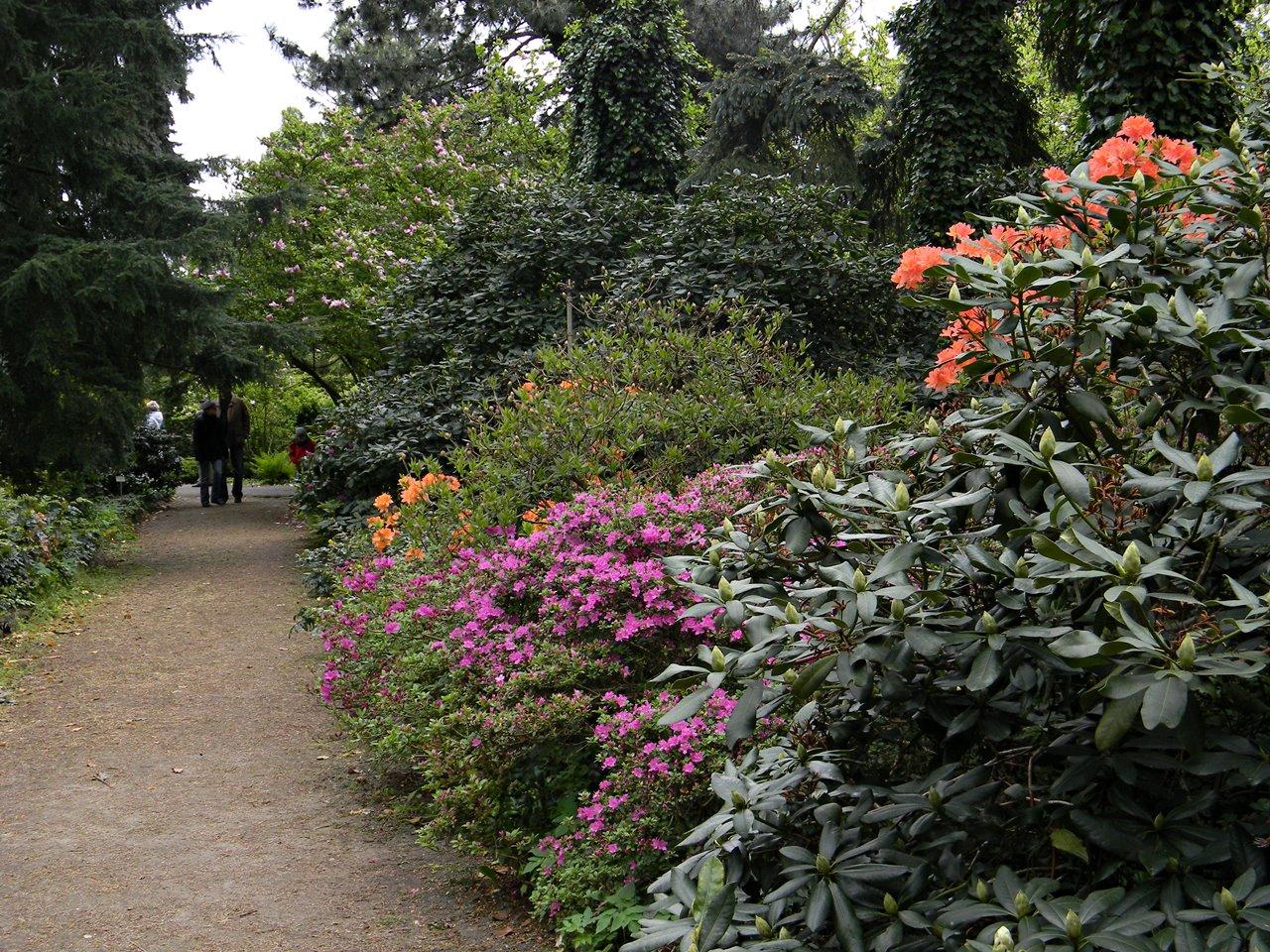 krzewy, drzewa, kwiaty, Kórnik, zwiedzanie