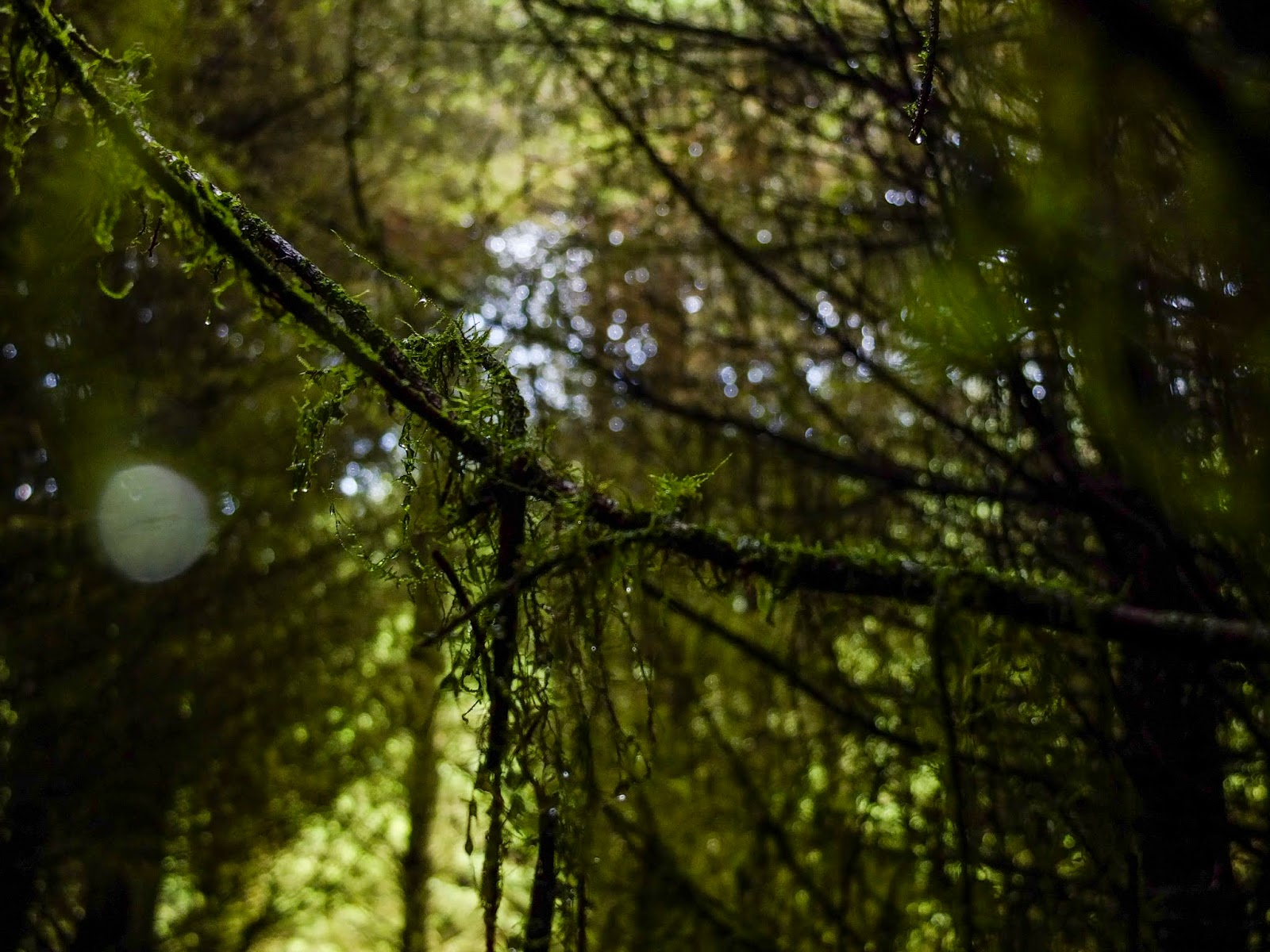 Mossy tree branches inside a forest with light shining through.