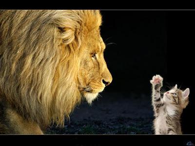Fotos de Colección: gato y leon