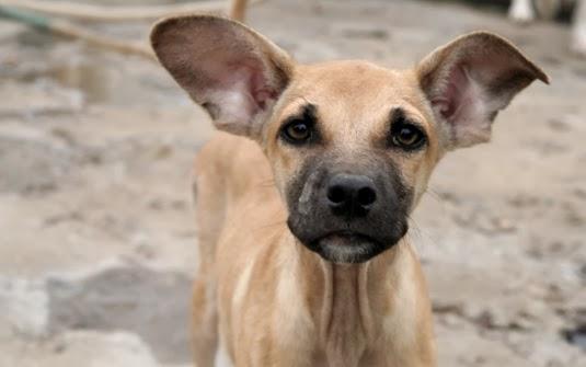 Resultado de imagen para perro callejeros