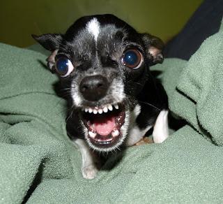 Una cosa que siempre me sorprende es como el dueño de un perro no admite que tienen un perro agresivo