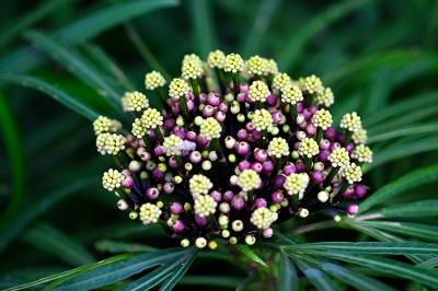 Materi Kingdom Plantae (Rangkuman SBMPTN)