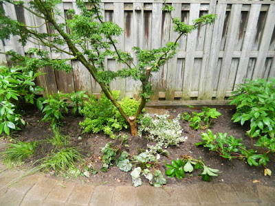 Cabbagetown Toronto shade garden makeover after by Paul Jung Gardening Services