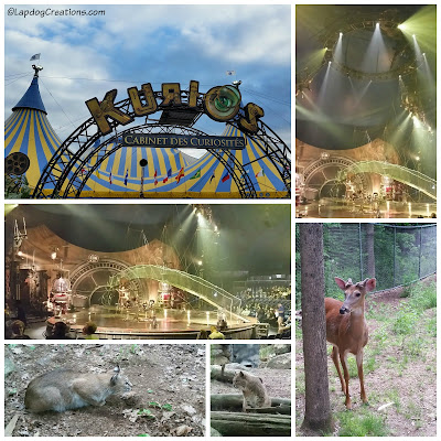 Spent our anniversary weekend at Cirque du Soleil Kurios and Squam Lakes Natural Science Center ©LapdogCreations