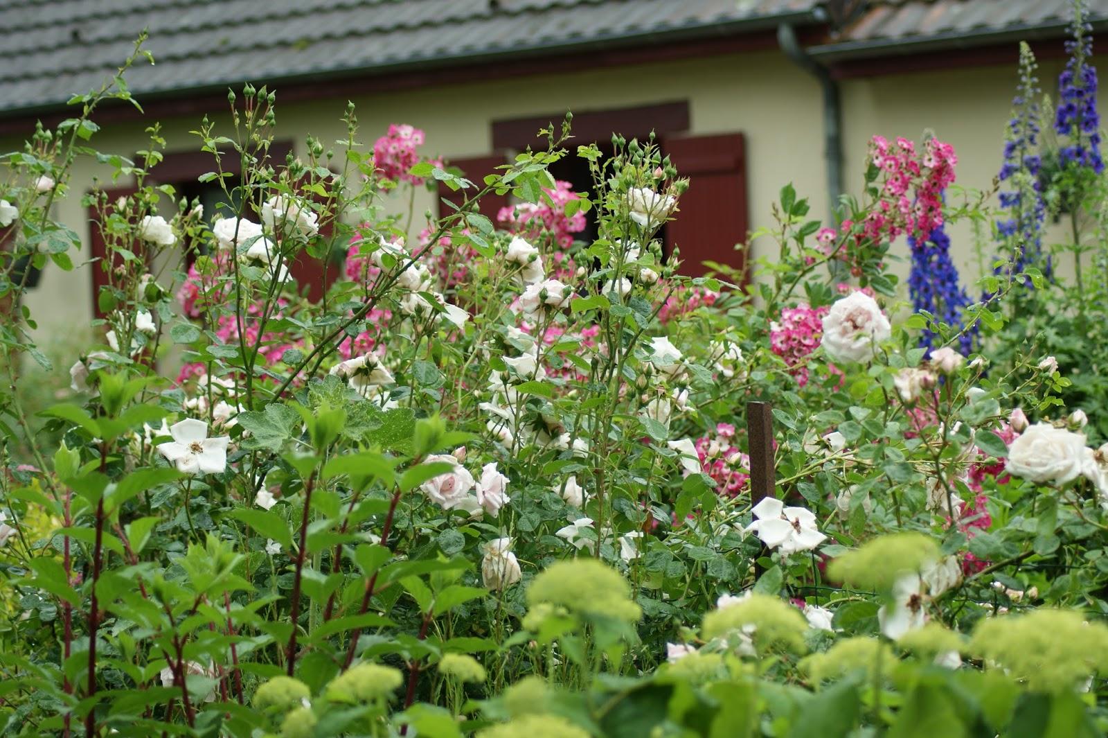 mon jardin dans la creuse floraisons du moment. Black Bedroom Furniture Sets. Home Design Ideas