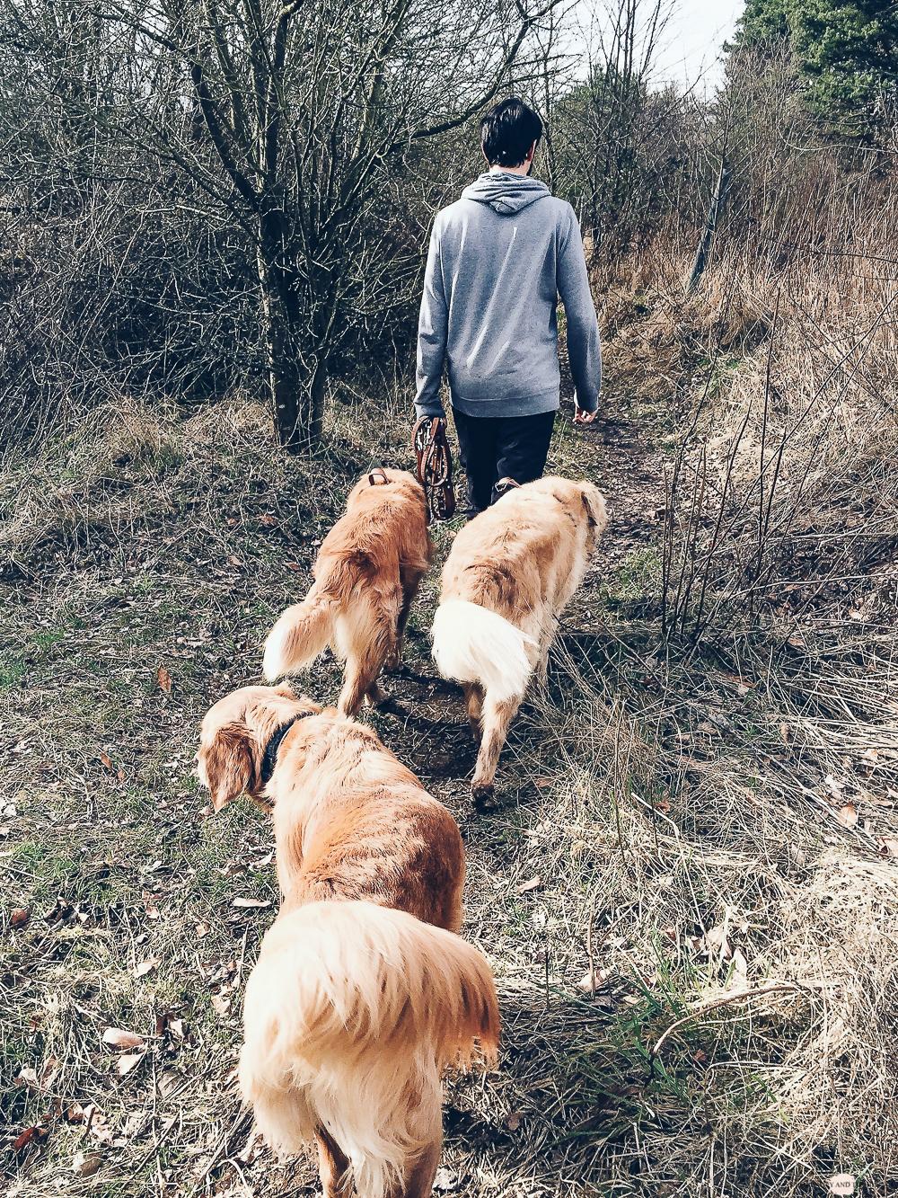 Werbung <br/> Urlaub mit Hund und BestFewo
