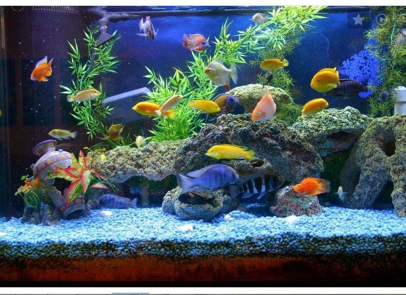 Daftar Harga Ikan Parrot